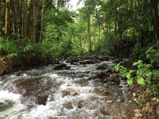 Chachagua, Коста-Рика: Rainforest