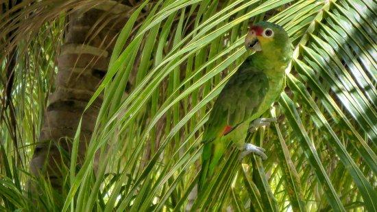 Sunset Beach House: Parrot seen right next to bar