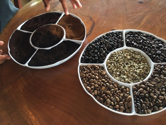 Diria Coffee Tour
