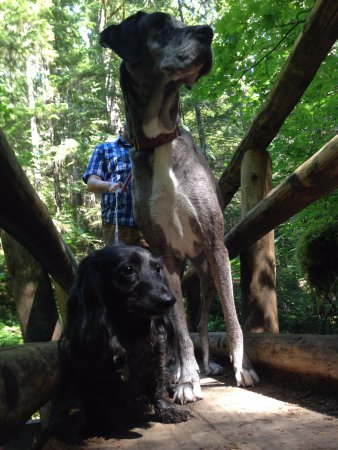 Salmon River Trail: Hiking with big and little dogs