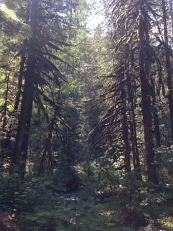 Salmon River Trail: Sunlight streaming through the trees