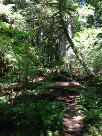 Salmon River Trail: Trees beside Trail