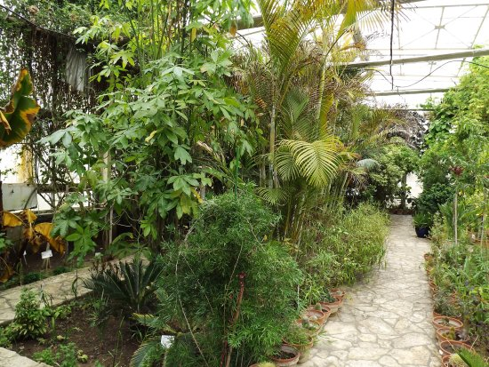 Stavroupoli, Yunanistan: Inside the greenhouse.