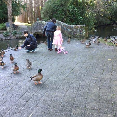 Инверкаргилль, Новая Зеландия: photo1.jpg