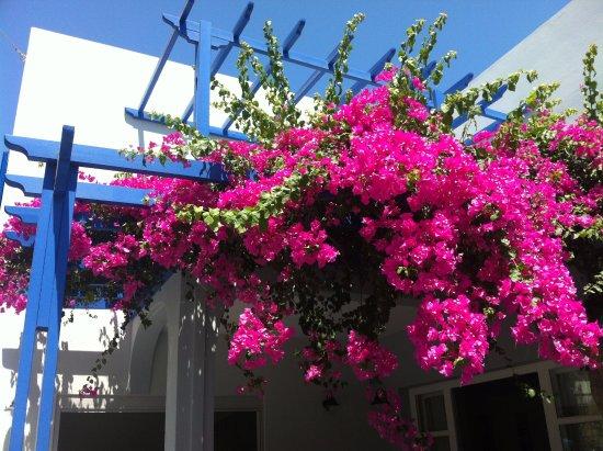 Hotel Hippocampus: Beautiful flower in front of the main door