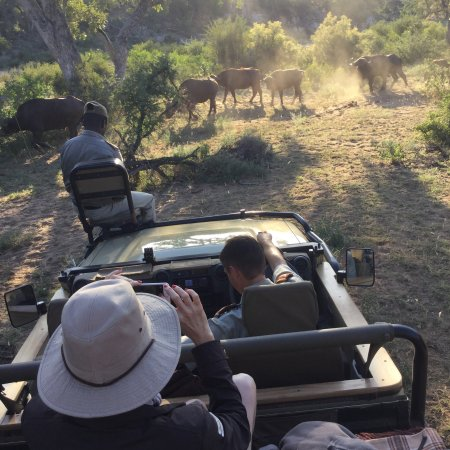 Mohlabetsi Safari Lodge: On our Safari Drive