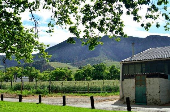 Constantia, Νότια Αφρική: Lovely surroundings