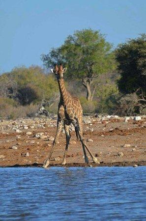 Windhoek, Namibië: received_10153747394781464_large.jpg