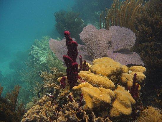 Divecenter Merlin: Hammer Korallen