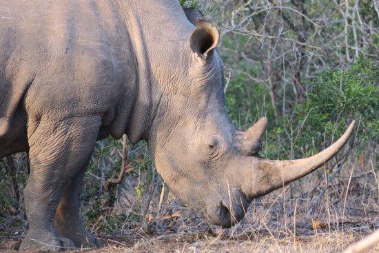 Phinda Private Game Reserve, Zuid-Afrika: photo1.jpg
