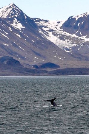 Foto de Longyearbyen