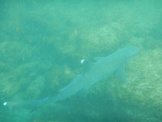 Puerto Villamil, Ecuador: He's harmless really!