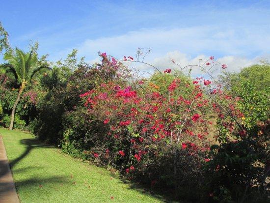 Aston at the Maui Banyan Foto