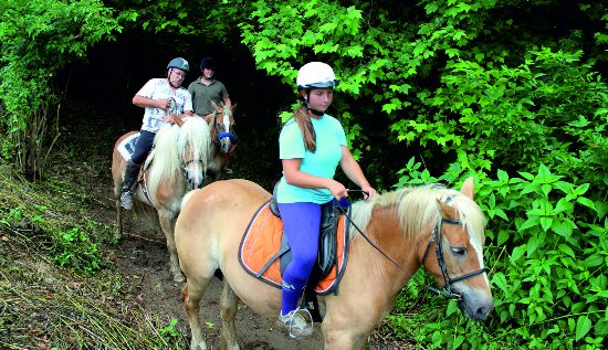 La Vall d'en Bas, España: Excursiones a caballo.