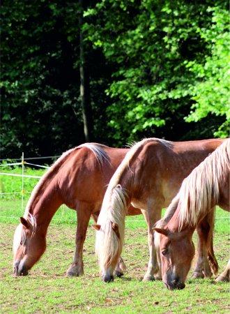 La Vall d'en Bas, إسبانيا: Bonitos caballos.