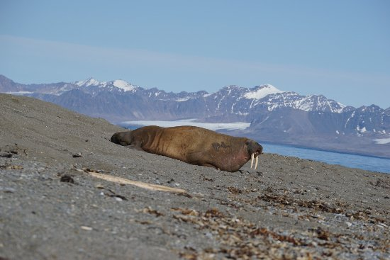 Longyearbyen, Noruega: photo1.jpg