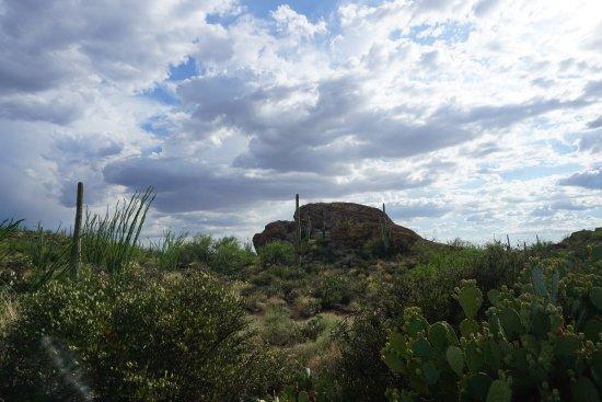 Национальный парк Сагуаро