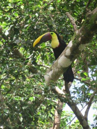 Bosque del Cabo Rainforest Lodge: toucan