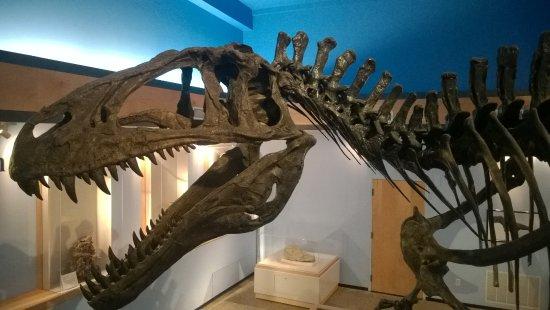 Idabel, OK: Tyrannosaurus, king of dinosaurs