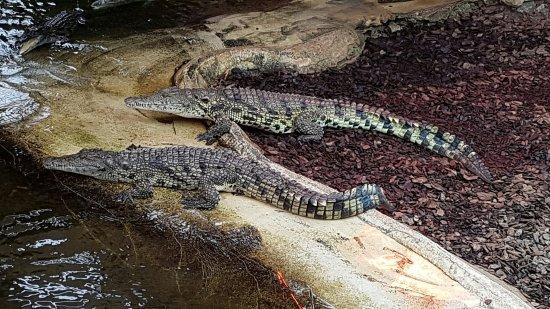 Brize Norton, UK: Crocodiles of the World