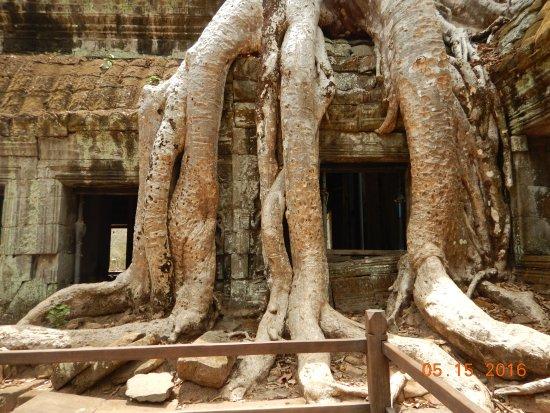 Cambodia Angkor Wat Day Tours: Ta Prohm