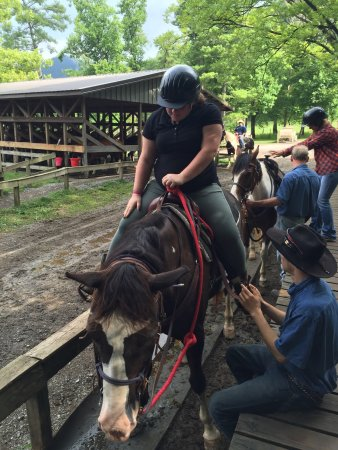 Townsend, TN: We had a great time!  Thanks everyone for a wonderful riding experience.