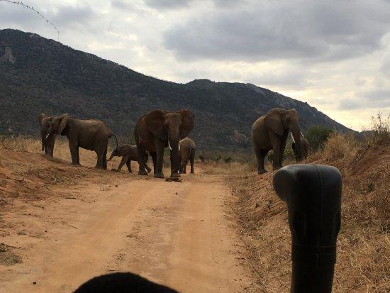 Campi ya Kanzi: Tsavo Park