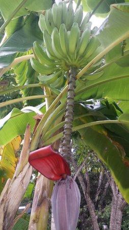 Sugarloaf Key, FL: Mangrove Mama's