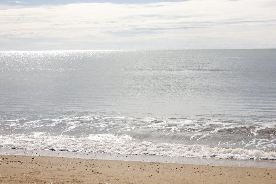 Moore Park Beach Foto