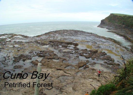Owaka, นิวซีแลนด์: Curio Bay - Petrified Forest.