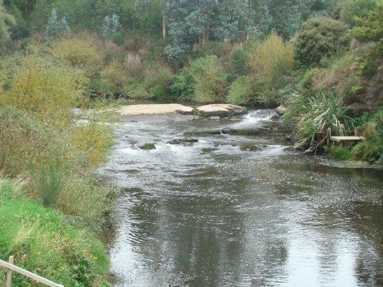 Owaka, นิวซีแลนด์: McLean Falls Bush walk