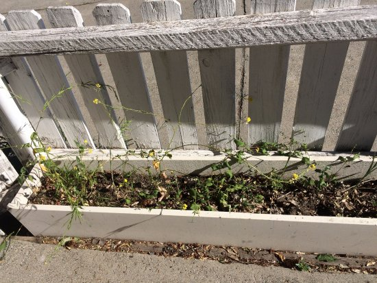 Deep Water Inn: Planting beds are now weed beds