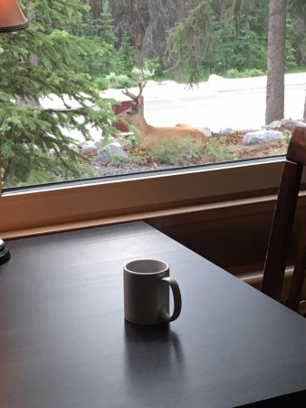 A Banff Boutique Inn - Pension Tannenhof: Great view of the local wildlife right outside the window for the breakfast nook!