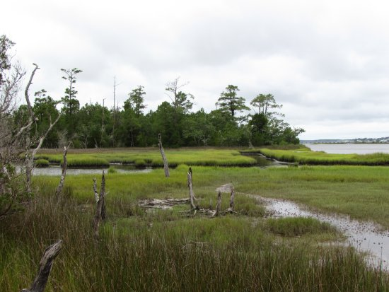 Croatan National Forest: nice views