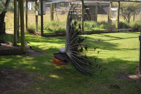 Ashley Park : Birds on the farm walk