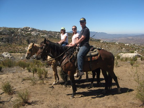 Hemet, CA: Responsive, obedient and strong horses