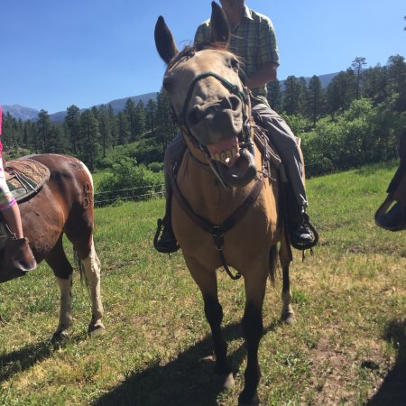 Rapp Corral : Great wranglers and fun horses!