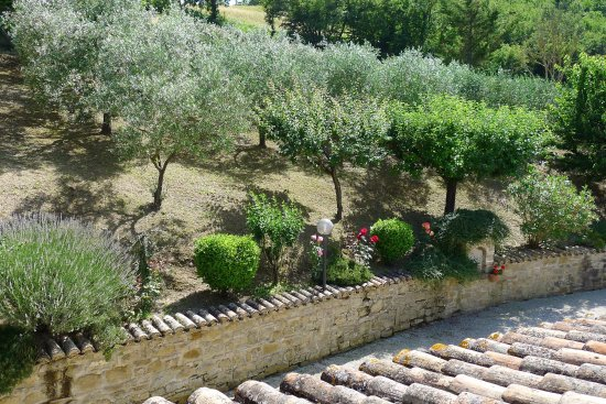 Valfabbrica, Italien: The view of the olive grove from the bedroom