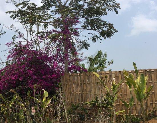 Gobleg, Indonesia: garden