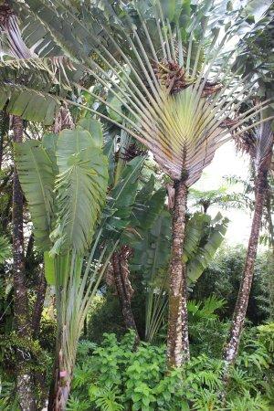 palmier 49