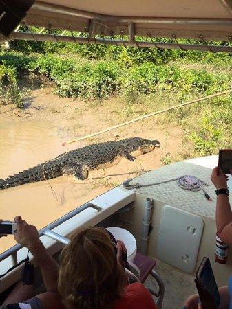 Arnhem, Australia: Massive 6m croc