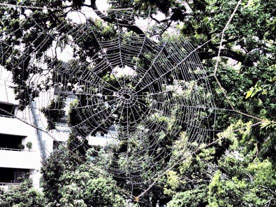 Auckland Art Gallery Toi o Tāmaki: Outdoor spider web and indoor modern art