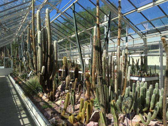 Zurich Succulent Plant Collection
