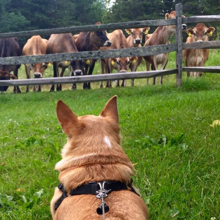 Huntington, VT: A curiosity on both sides of the fence...