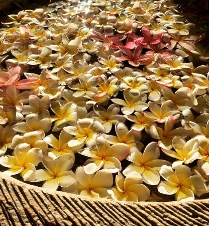 Bumi Ayu Bungalows: Beautiful Bali resort. Lovely canopy over the bed. Lovely pool. Friendly approachable staff. On