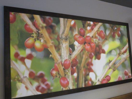 Wexford, PA: Coffee bean art