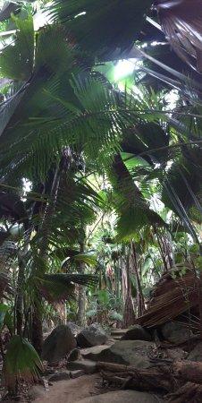Остров Праслен, Сейшельские острова: photo0.jpg