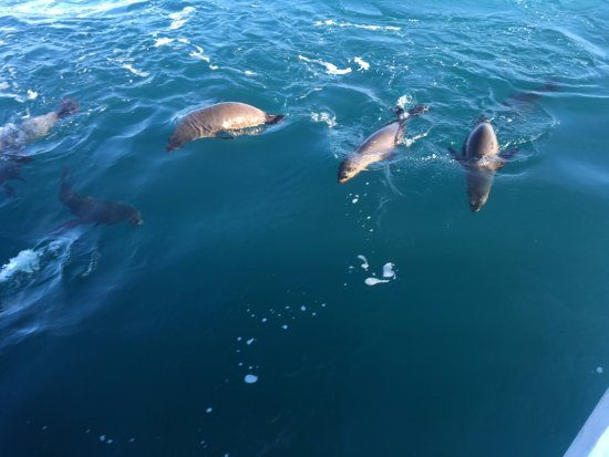 Cowes, أستراليا: meeting the locals at Cowes Phillip Island thanks to Wild Life Coast Cruises