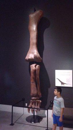 Ottawa, Canadá: Leg Bone of BIG Dinosaur