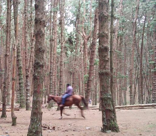 Top 10 Place To Visit In Kodaikanal India Tourism Tat: Picture Of Pine Forest, Kodaikanal